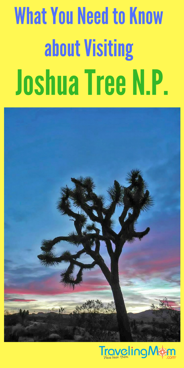 Tips for visiting Joshua Tree National Park in California for your next family vacation. Dramatic trees, huge boulders, and palm-lined oasis will keep everyone happy.