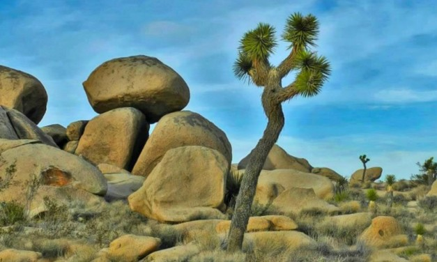 What You Need to Know about Visiting Joshua Tree National Park in California