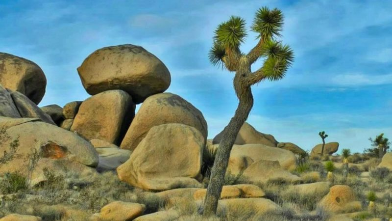 Tips for visiting Joshua Tree National Park in California