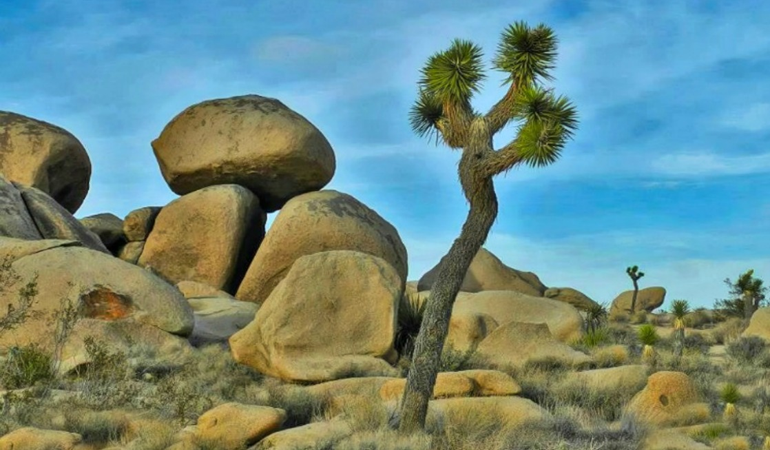 Natural playground at Joshua Tree National Park in California.