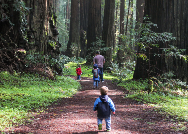 Family hiking in Redwoods during West Coast Road Trip