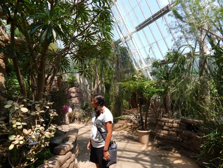 Checking out the vegetation at Cleveland Botanical Garden in Cleveland, Ohio. It's one of the fun things to do in Cleveland with kids.