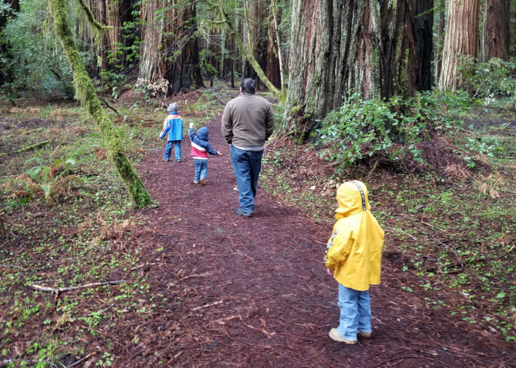 Hiking with kids in the Redwoods