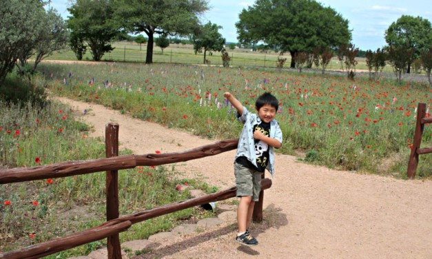 5 Things to do in Fredericksburg, Texas with Kids