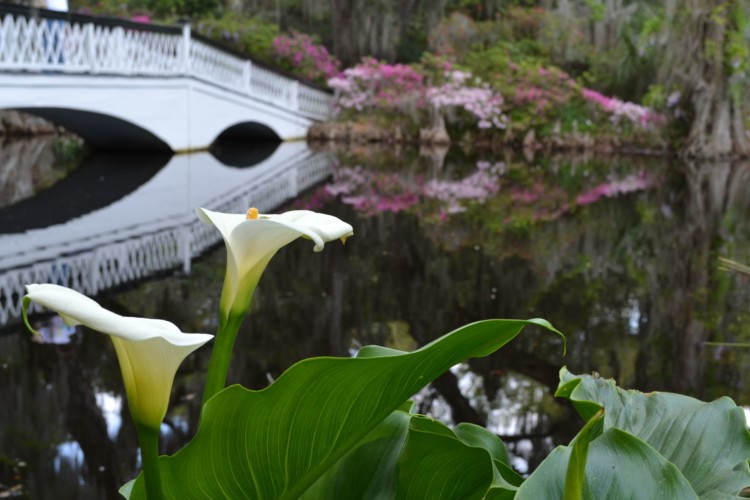 Charleston, SC is one of many amazing road trip destinations in the Southeast; this is the beautiful Magnolia Plantation and Gardens.