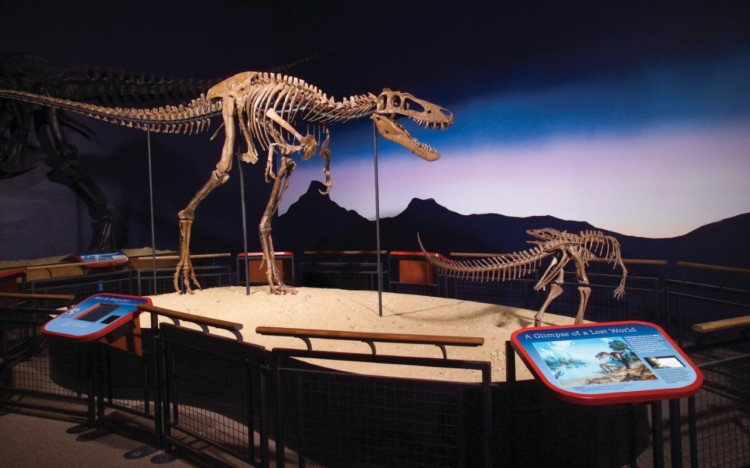 Put the Burpee Museum of Natural History on your list of fun summer things to do in Rockford IL