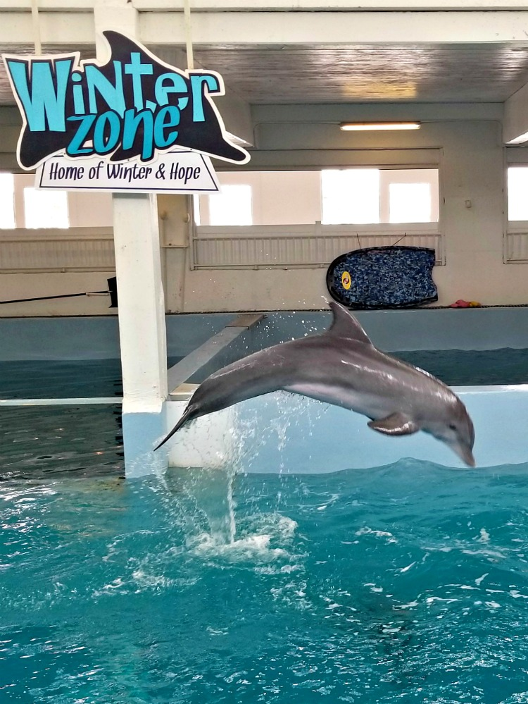 Visit the Clearwater Marine Aquarium to see Winter and Hope from the Dolphin Tale movies