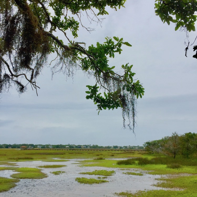 St. Simons Island holds the most diverse ecosystem east of the Mississippi River.