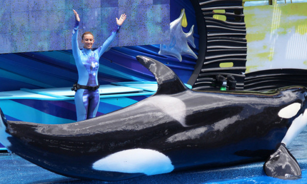 SeaWorld Tips: Best Hotels Near SeaWorld Orlando