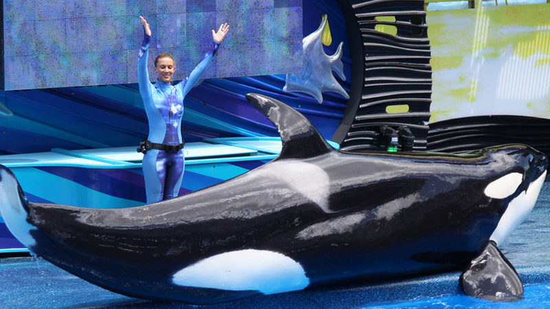 A visit to see Shamu is part of the SeaWorld experience. Find out how to book the best hotels near SeaWorld Orlando.