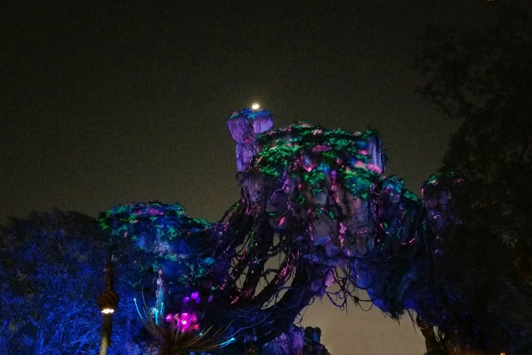 Look up to see the floating mountains of Pandora in Animal Kingdom at night