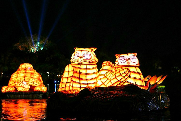 Owls from the Animal Kingdom night show