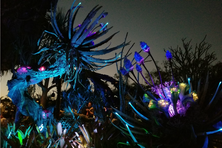 Animal Kingdom at night is filled with bioluminescent plants