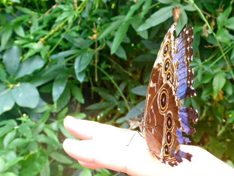 So many amazing Things To Do In Monteregie, including a butterfly pavilion.