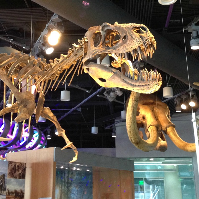 Raleigh Museum of Natural Sciences, one of the fun things to do in Raleigh NC