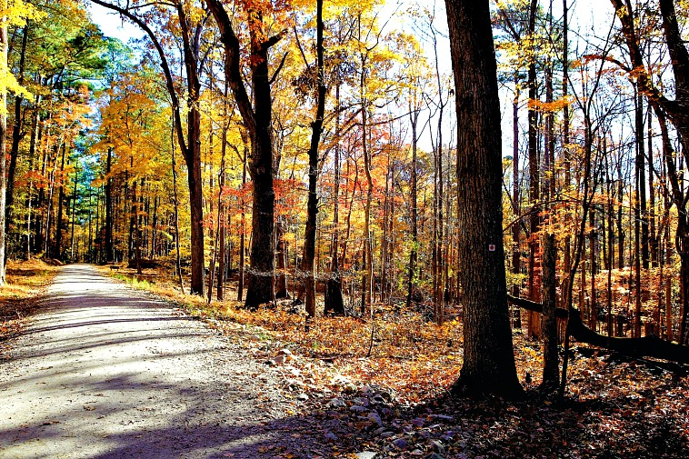 fun things to do in Raleigh include exploring trails in William B. Umstead State Park