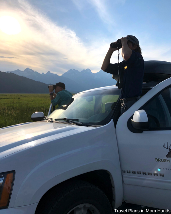 One of the things to do in Jackson Hole and the Grand Tetons is a wildlife tour, and BrushBuck Wildlife Tours does a fabulous job.
