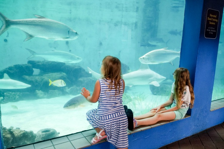 Kids love being able to see sharks and manatees from just feet away at the Mote Aquarium in Sarasota, Florida