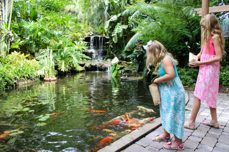 Feeding the fish at Selby Botanical Gardens is a popular activity when you visit Sarasota with kids