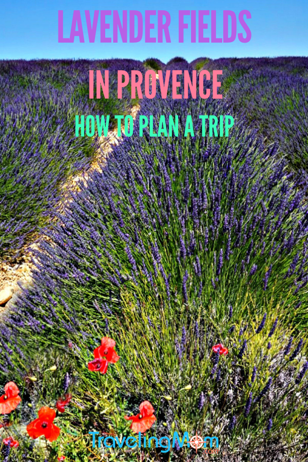Lavender fields in Provence France are calling your name. Learn how to plan a trip. #lavenderfields #provence