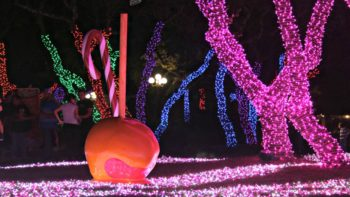 SeaWorld San Antonio is one of the places you can see Christmas Lights in Texas