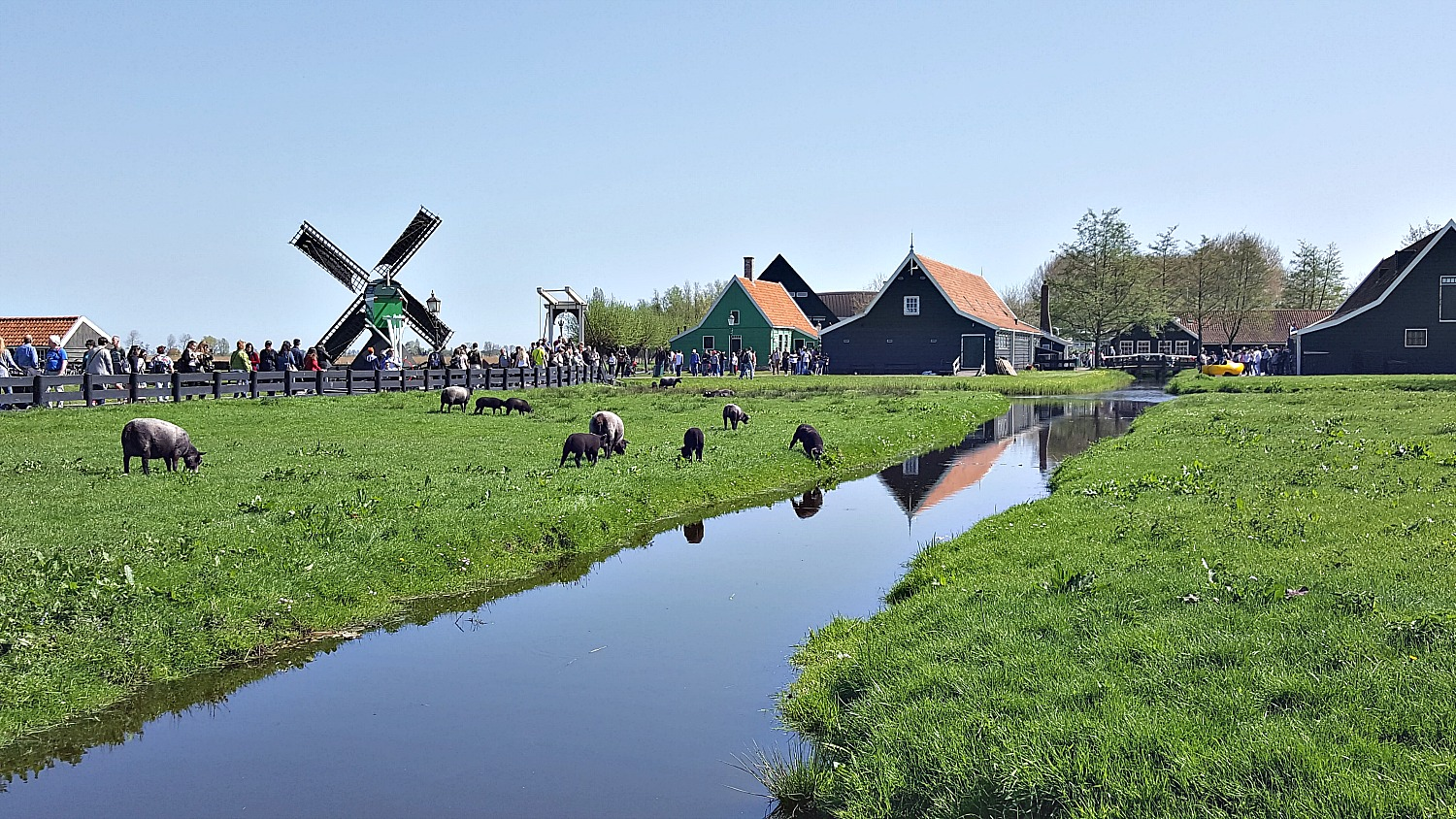 Best day trips from Amsterdam. Idyllic scene in Zaanse Schans village.