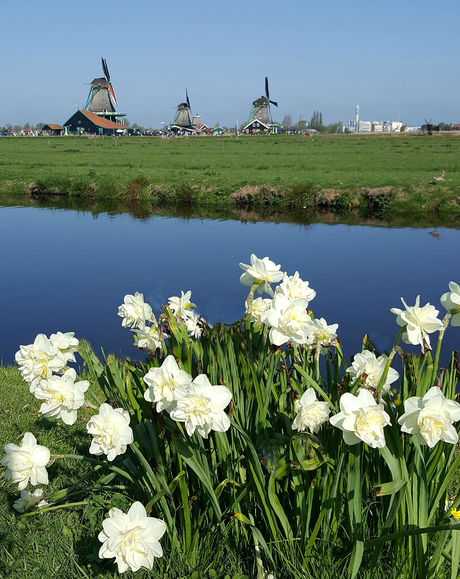 Best day trips from Amsterdam. Flower, mills, and water - quintessential Holland at Zaanse Schans.