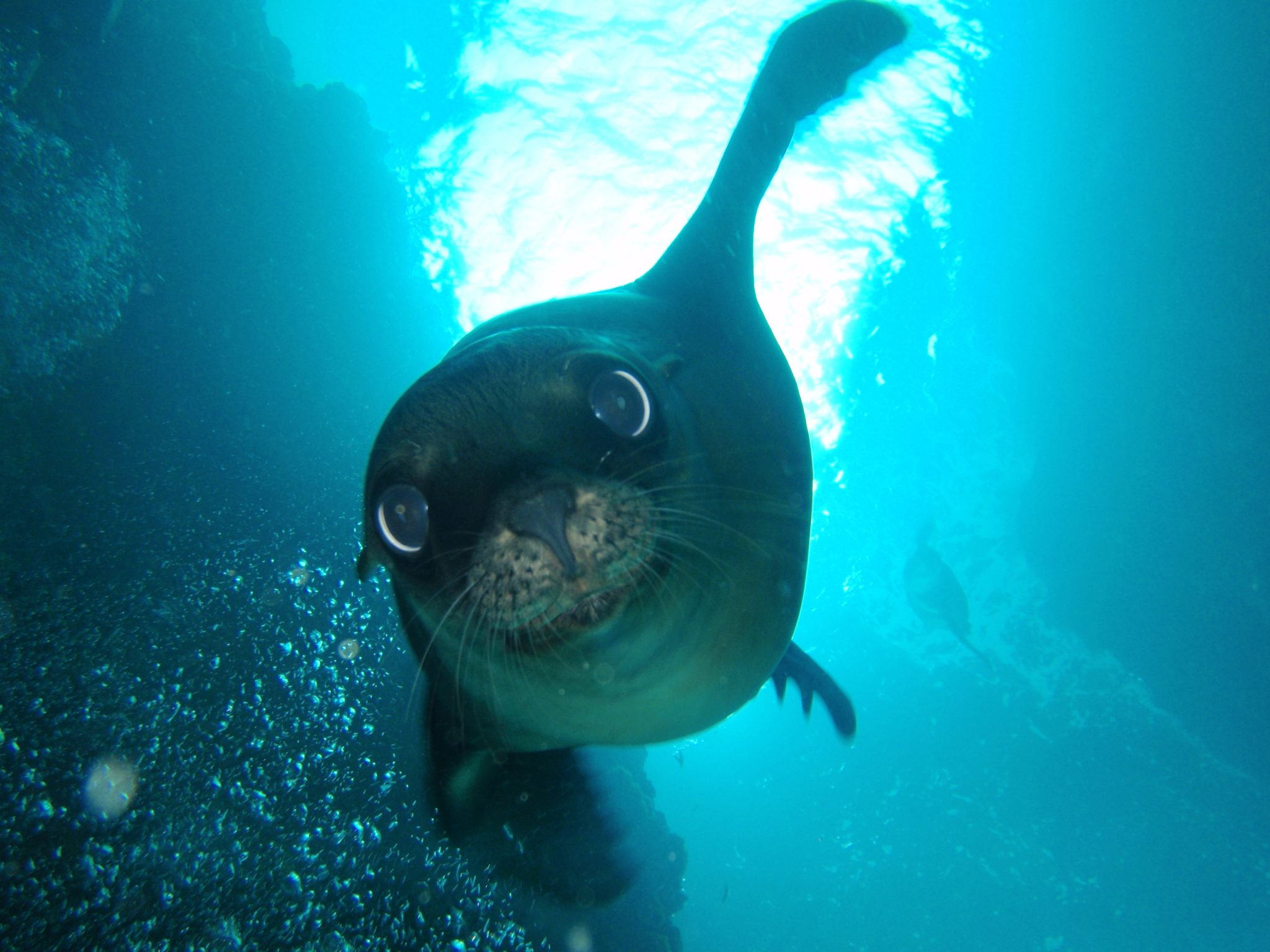Swimming with Sea Lions is one of the highlights of visiting La Paz Baja California Sur that is described in this complete visitor's guide to La Paz Baja California Sur