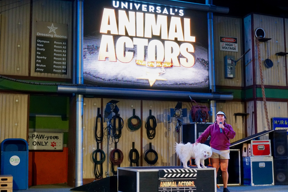 Universal's Animal Actors is a family friendly show. Photo by Multidimensional TravelingMom, Kristi Mehes.