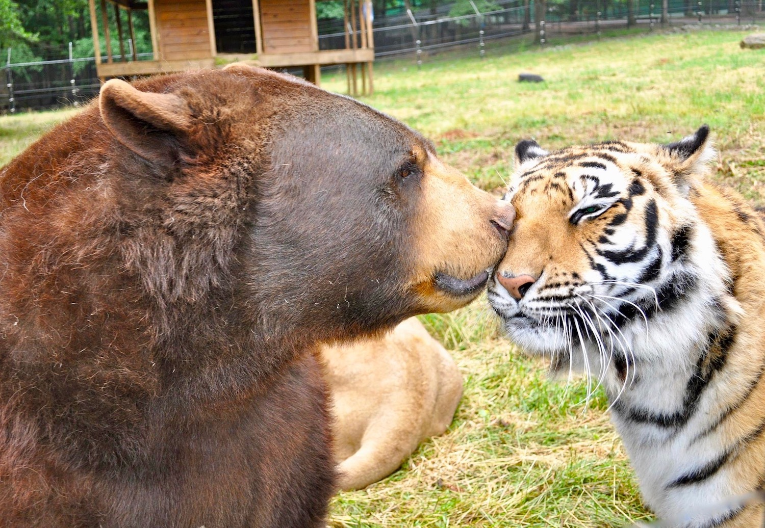 Outdoor fun in Henry County includes rarely seen exotic animal friendships.