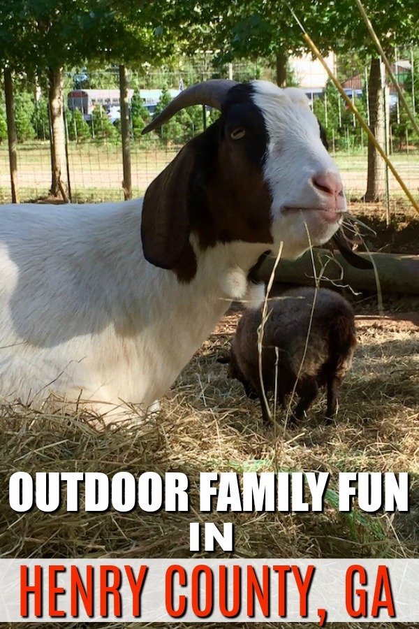 Outdoor fun in Henry County includes face-to-face encounters with farm animals. #HenryCounty #OutdoorFun