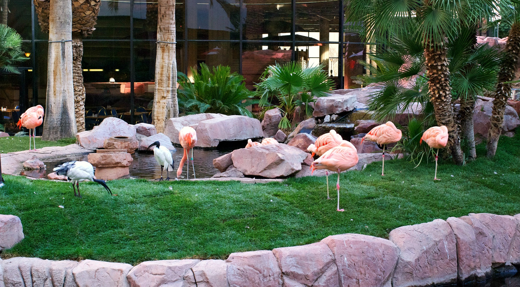 One of the coolest Free Things To Do In Las Vegas is the Wild Life Habitat at The Flamingo Hotel