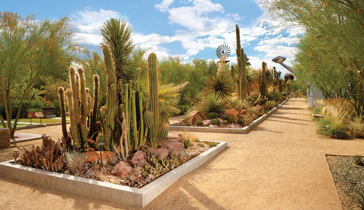 Fun, Education and Free Things To Do in Las Vegas must include Springs Preserve.