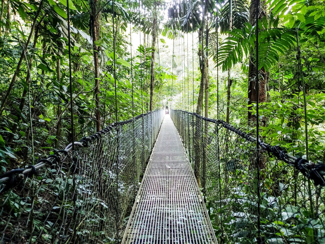 Things to do in Costa Rica with kids include the Mistico Hanging Bridges in Arenal