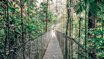 Mistico Hanging Bridges are one of the more popular things to do in Costa Rica with kids