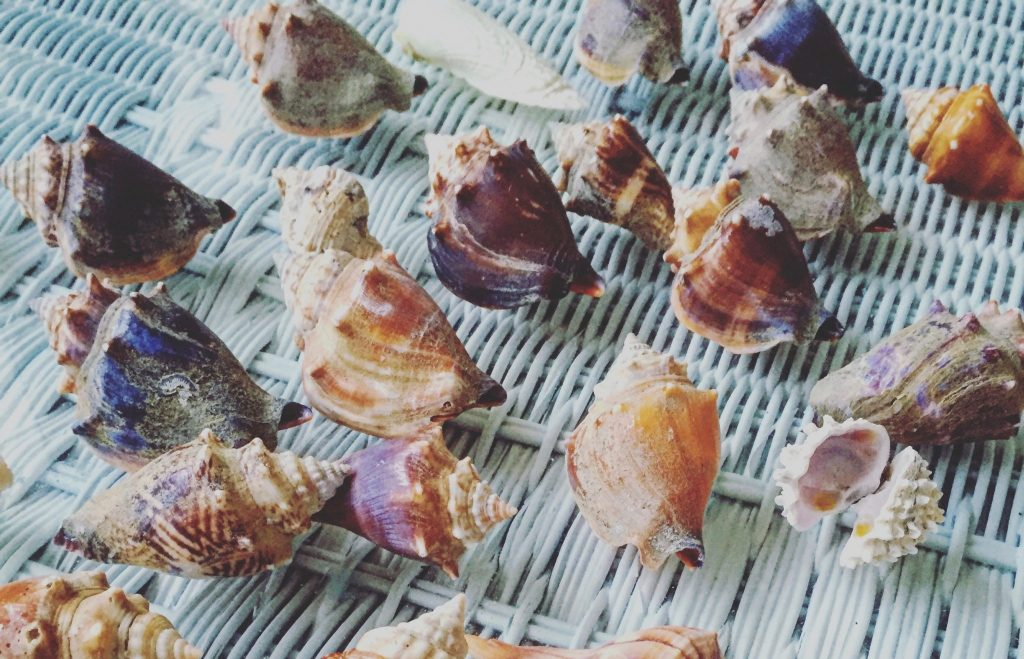 sea shells collected during a day at the beach - TravelingMom