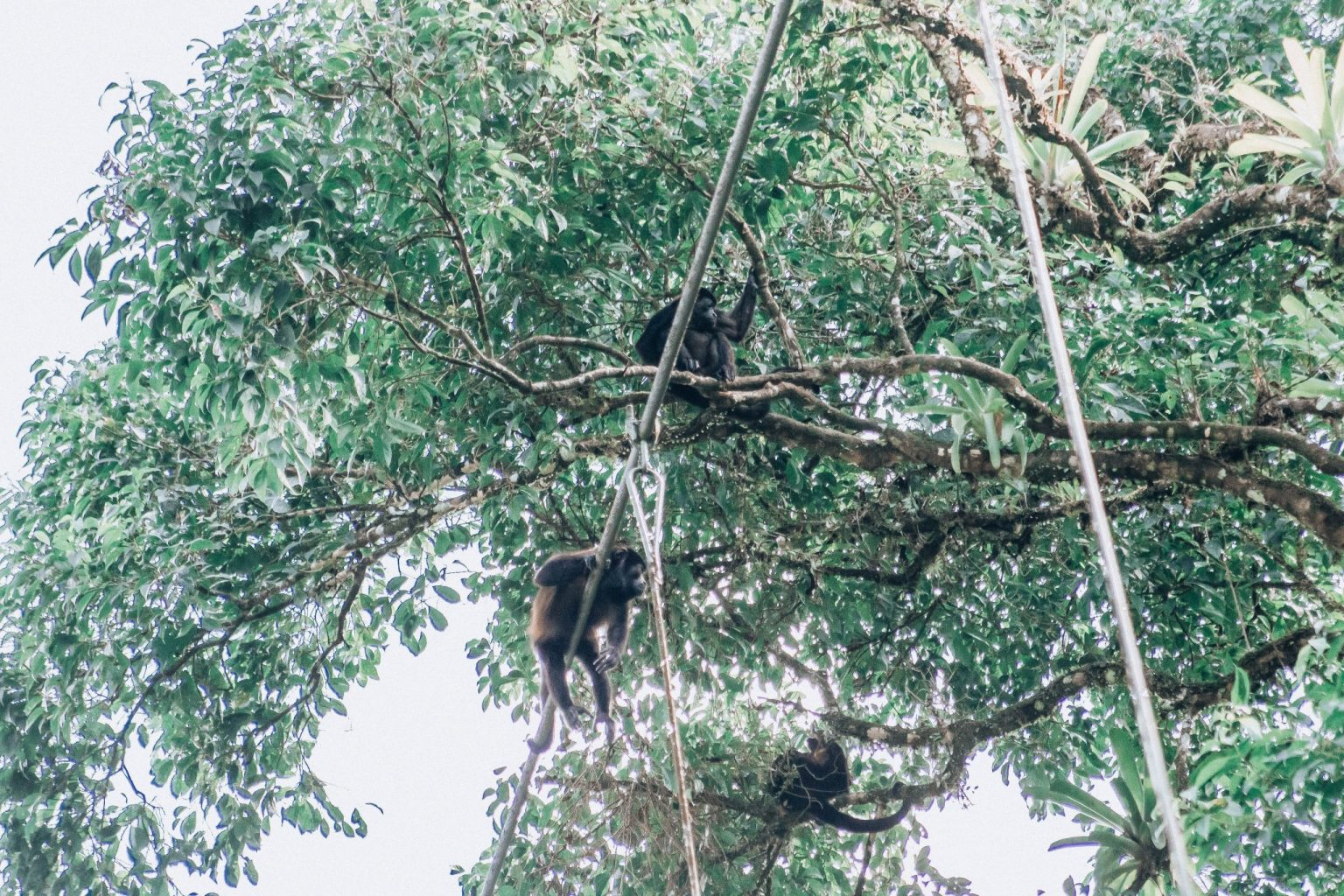 One of my favorite things to do in Costa Rica with kids is watch the monkeys in the trees