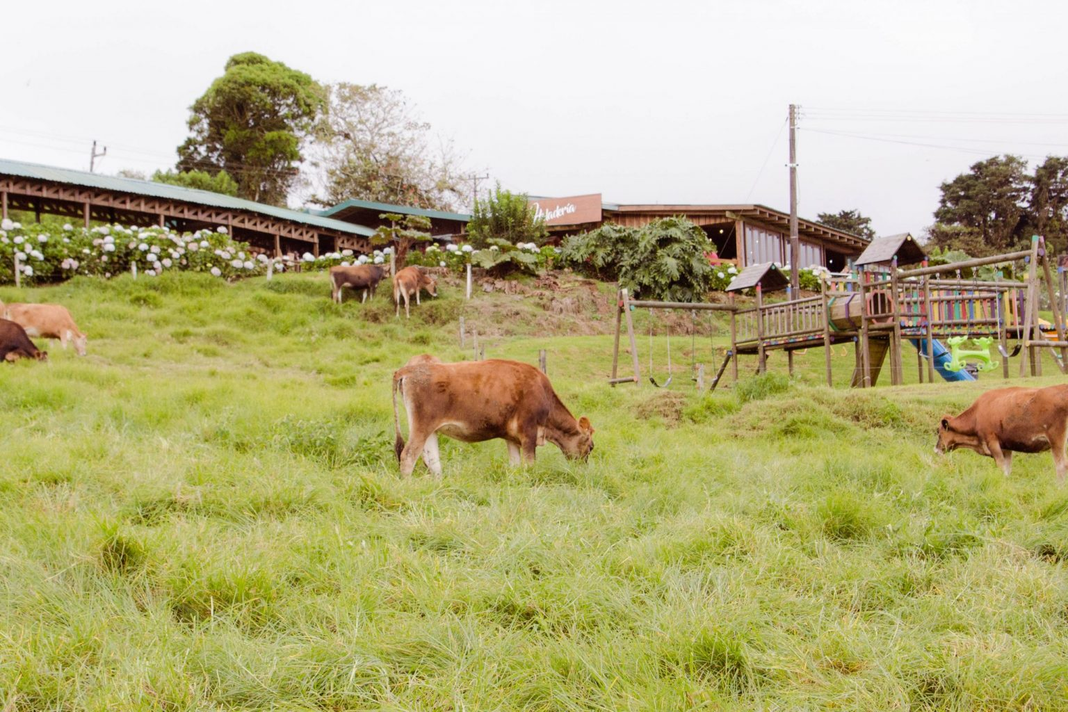 Corso Lecheria is one of the things to do in Costa Rica with kids