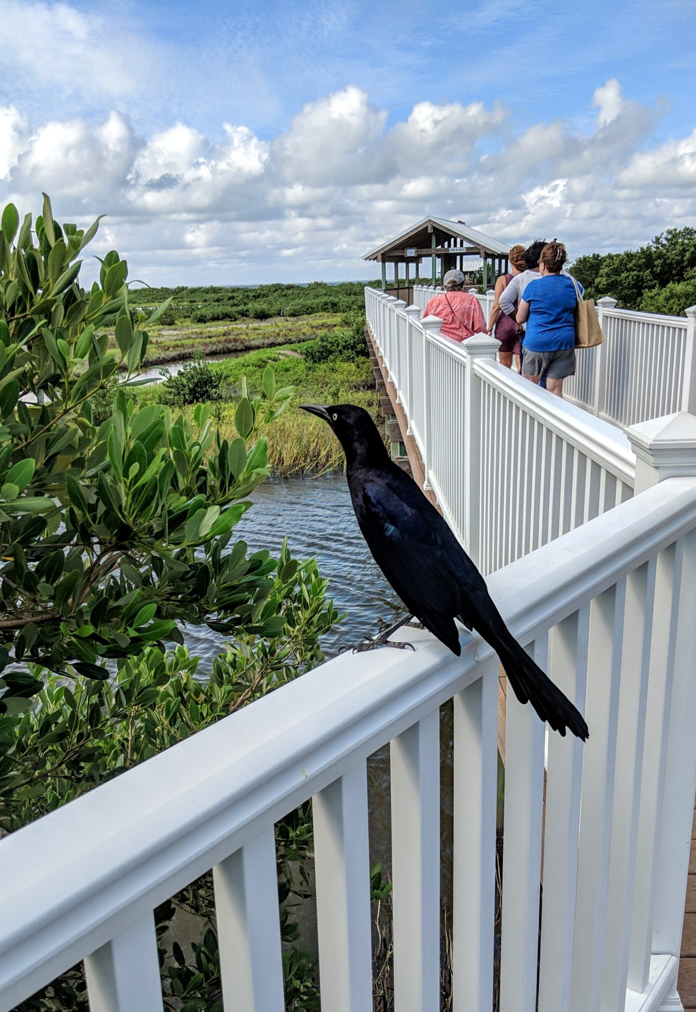 A bird visiting SPI Nature Center on South Padre Island Texas - TravelingMom.