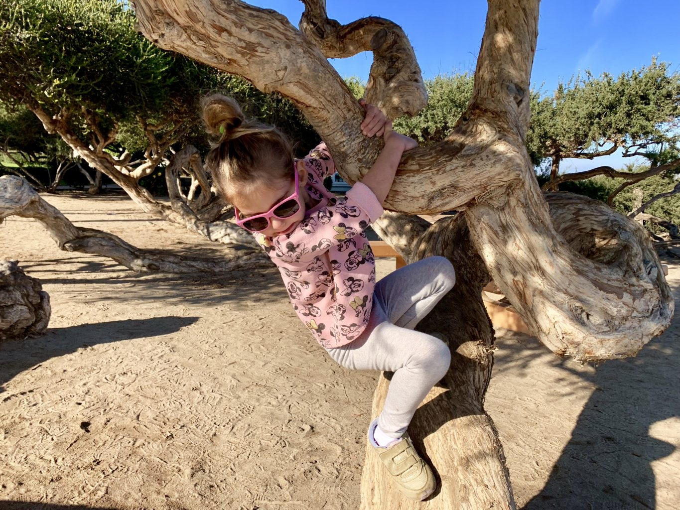 Fun things to do in La Jolla with kids: tree climbing at La Jolla Shores Beach