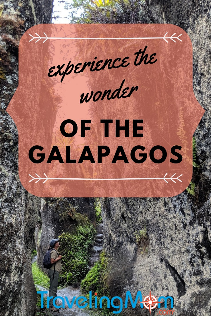 Learn about the islands, the animals, the lava fields and the wonder of the #Galapagos #Islands before booking your #cruise.