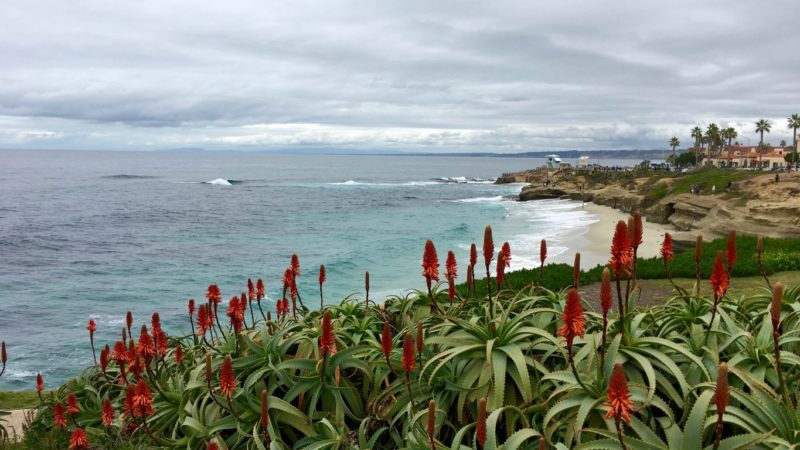 Beaches at La Jolla Cove