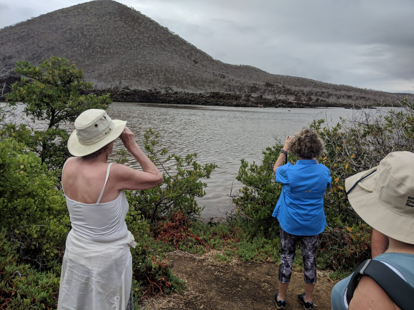 Looking for Galapagos Islands flamingos.