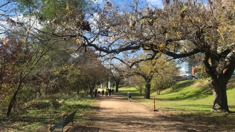 Looking for dog friendly places in Austin? Head to Zilker Park