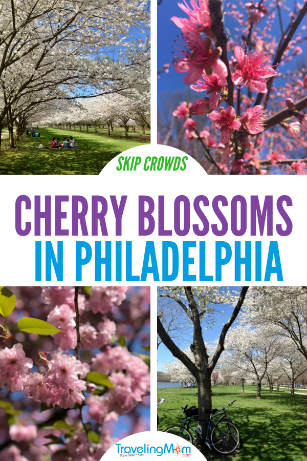 Skip the crowds in DC and enjoy cherry blossoms in Philadelphia instead. Mostly for free!