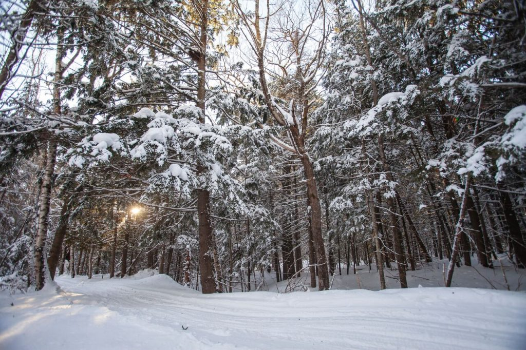 Geocaching in a forest in the winter