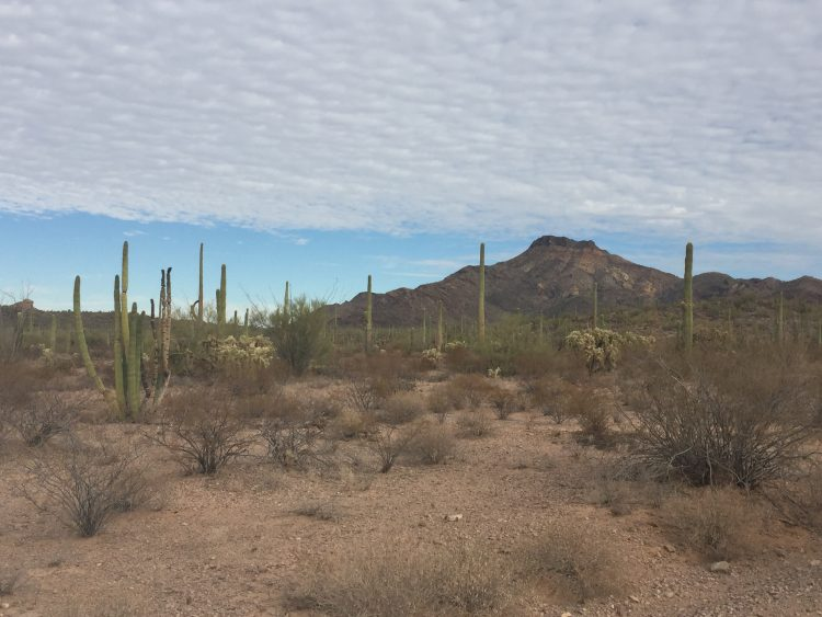 Organ Pipe National Monument on Road Trips USA for TravelingMom