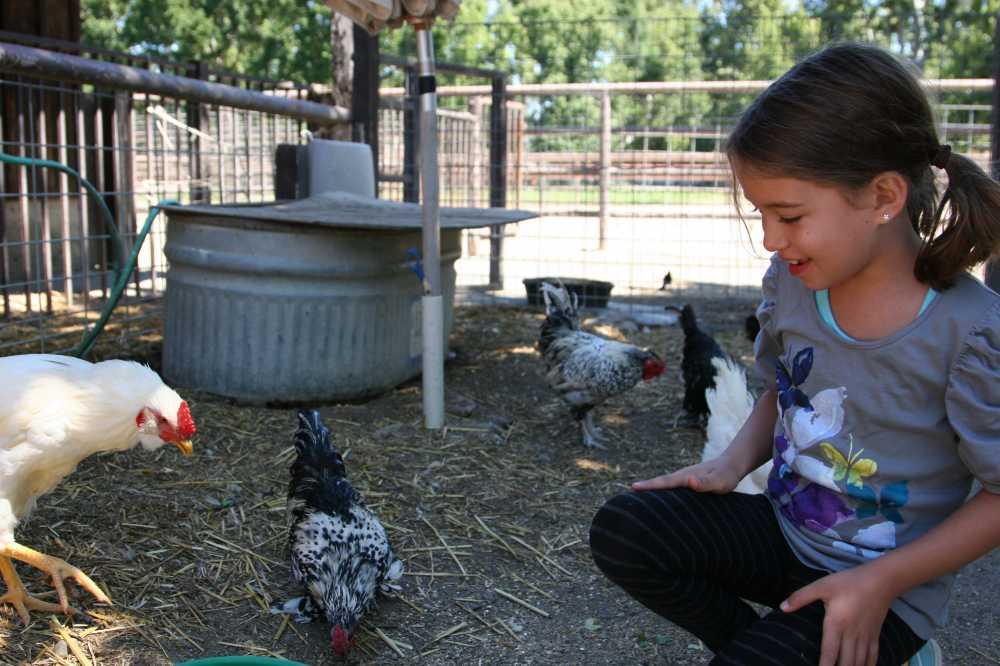 Best dude ranches for familes offer young kids plenty of hands-on experiences.