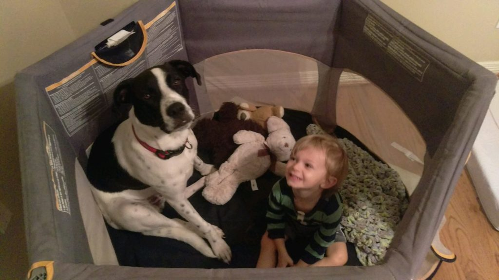 Twice the fun! A play yard can double as a fort with your dog. Tips and Products Baby Must-Haves: Why You Don't Need a Crib