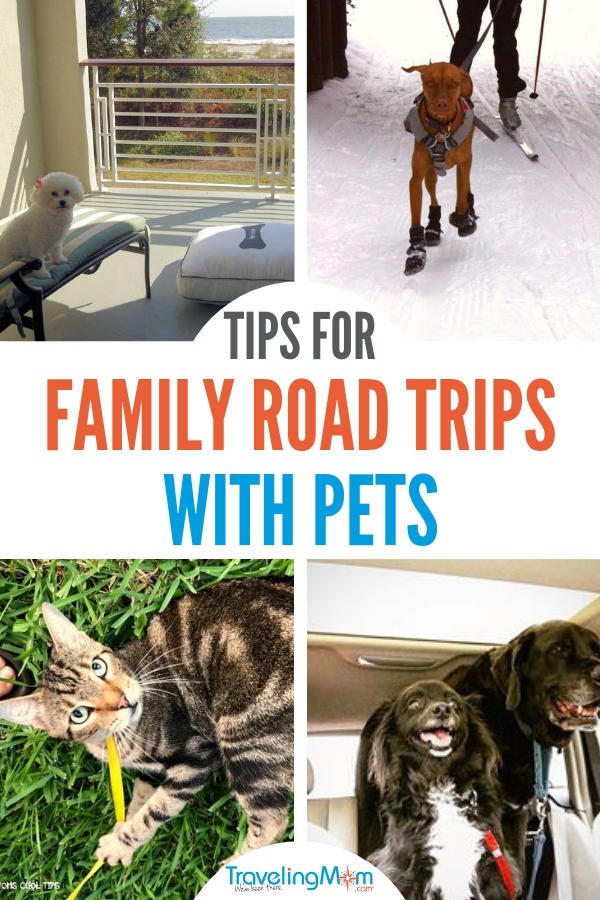 Taking a road trip with a dog or cat is fun for the entire family #roadtripwithadog #travelingmom #travelingwithpets